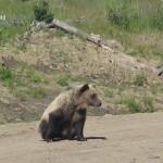 Marks Bear