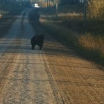 Sheena Bear
